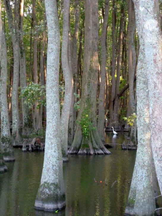 Stumpy Lake Trees